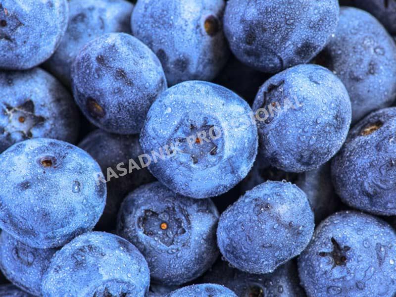 prodaja sadnice borovnice bluemeri