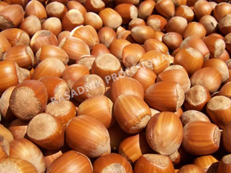 prodaja sadnice lesnika ludolf
