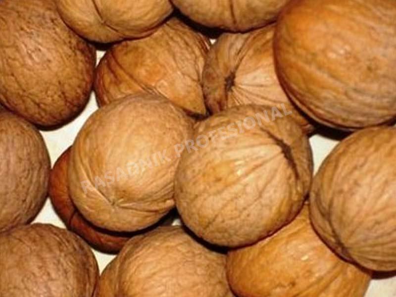 prodaja sadnice oraha elit