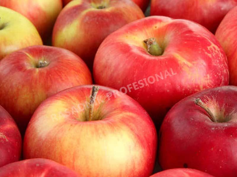 sadnice jabuke prim ruz