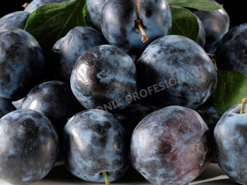 prodaja sadnica stare sorte sljiva crnosljiva
