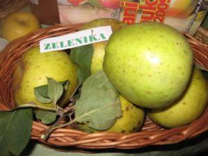 zelenika jabuka